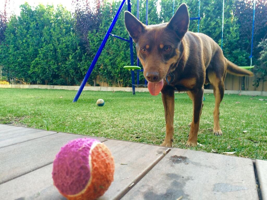 Housesitting Tierbetreuung