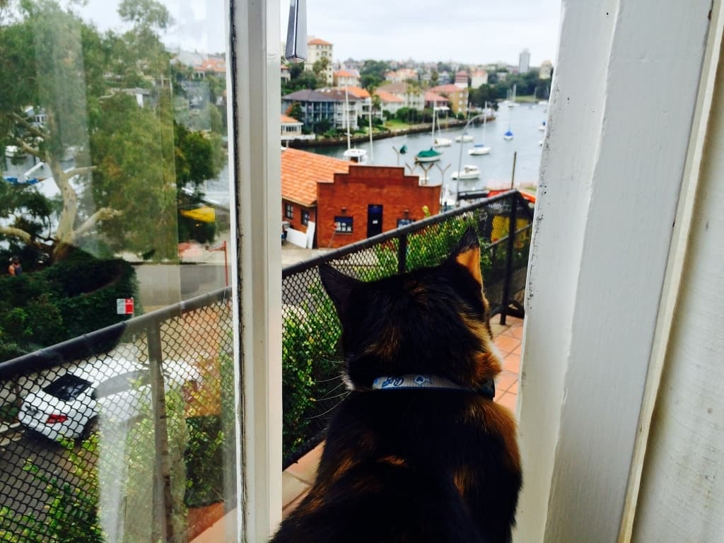 Housesit Katze