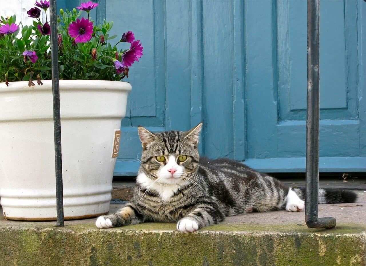 Housesitting Katze