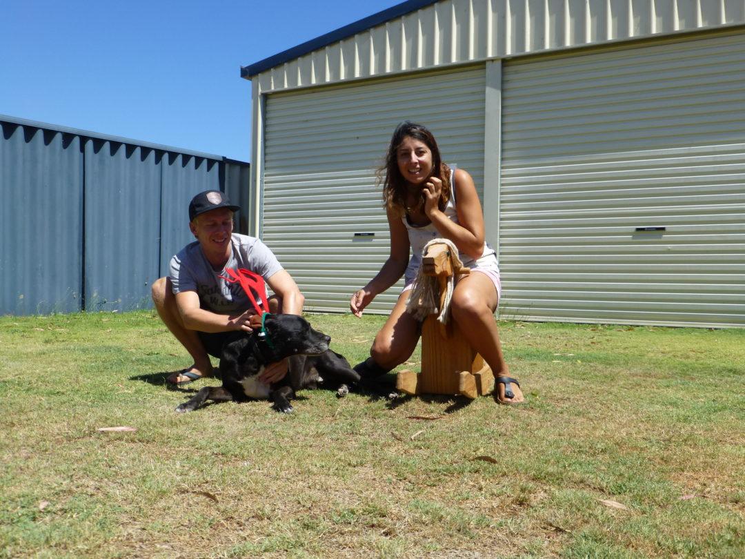 Hund Housesitting Australien Weihnachten