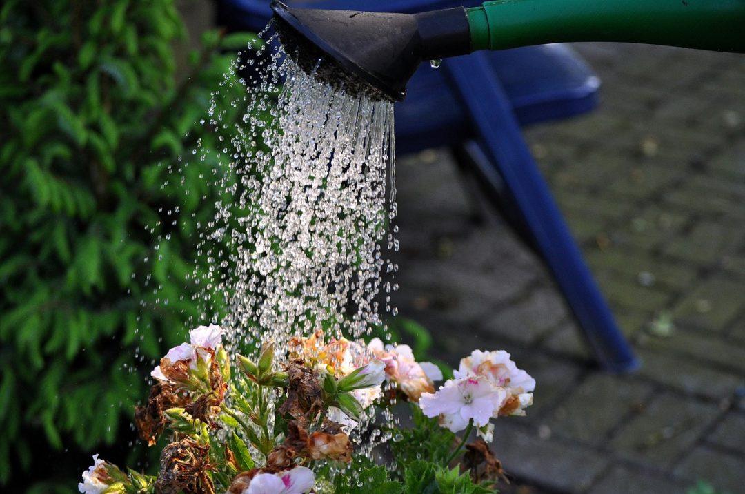 Blumen giessen Housesitter Fehler vermeiden