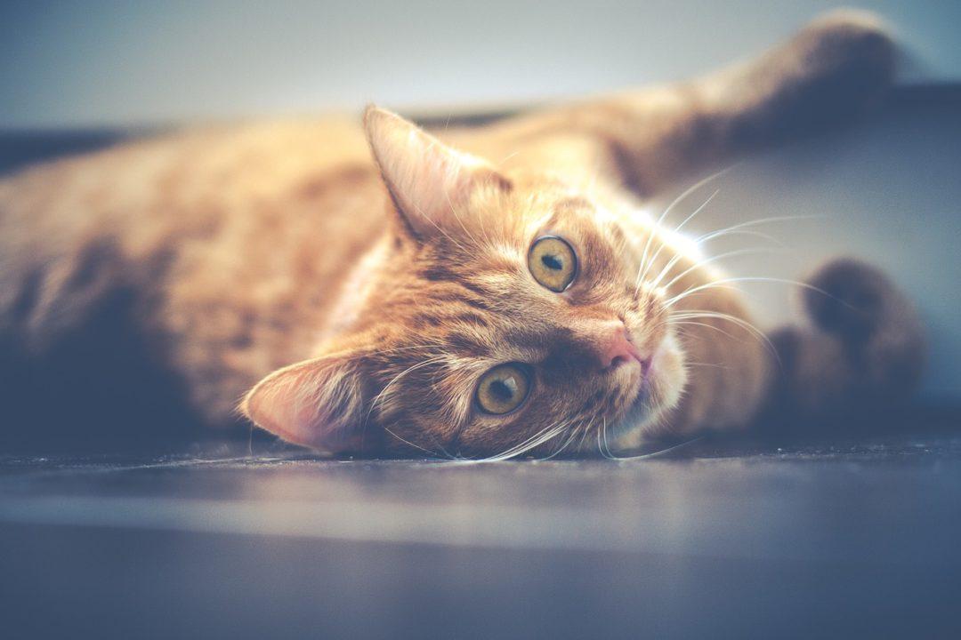Tierbetreuung als Housesitter