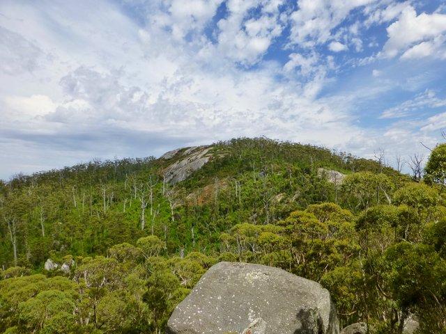 Karri Lookout Western Australia